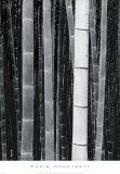 Bamboo no. 4, Kyoto アート : クリス・ハニーセット