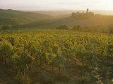 Vineyards and Ancient Monastery, Badia a Passignano, Greve, Chianti Classico, Tuscany, Italy Photographic Print by Michael Newton