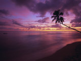 Gibbes Bay at Sunset, Barbados, West Indies, Caribbean, Central America Reproduction photographique par Gavin Hellier