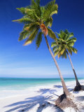 Palm Tree, White Sand Beach and Indian Ocean, Jambiani, Island of Zanzibar, Tanzania, East Africa Reproduction photographique par Lee Frost