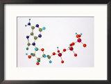 Adenosine Triphosphate Framed Photographic Print by David M. Dennis