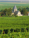 Vineyard, Oger, Champagne, France, Europe Photographic Print by John Miller