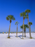 Palms and Beach, Clearwater Beach, Florida, USA Reproduction photographique par Fraser Hall