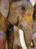 Painted Elephant, Close up of Head, Jaipur, Rajasthan, India Photographic Print by Bruno Morandi