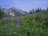 Flower Meadow, Mount Revelstoke National Park, Rocky Mountains, British Columbia (B.C.), Canada Photographic Print by Geoff Renner