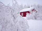 Nordmarka, Oslo, Norway, Scandinavia, Europe Photographic Print by Kim Hart