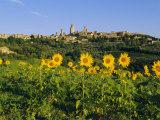 San Gimignano and Field of Sunflowers, Tuscany, Italy Photographic Print by Bruno Morandi