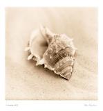 Il Oceano III Affiches par Alan Blaustein