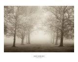 Layers of Trees II Plakater af Igor Svibilsky