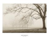 Layers of Trees I Kunst af Igor Svibilsky