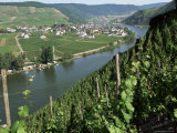 Vineyards on Slopes Above the Mosel River, Gravenburg, Germany, Europe Fotografisk tryk af Oliviero Olivieri