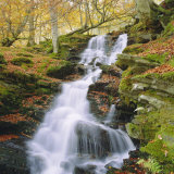 Birks of Aberfeldy, Tayside, Scotland, UK, Europe Fotografisk tryk af Roy Rainford