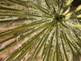 Close Up of Yucca Plant Sedona, Arizona USA Fotografisk tryk af John Burcham