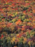 Fall Foliage in New Hampshire's White Mountains Lámina fotográfica por Nowitz, Richard