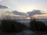 Beach Grass on Anna Maria Island, Holmes Beach, Florida Photographic Print by Stacy Gold