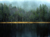 Arrow-Straight Evergreens Are Reflected in a River or Lake; the Rest is Lost in Mist Fotografisk tryk af Mattias Klum