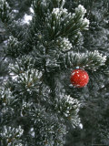 Holiday Ornament Hanging on Snow Dusted Pinion Tree, Colorado Fotografisk tryk af Kate Thompson