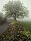 Hedge-Lined Country Road in Somerset, England Fotografisk tryk af Sam Abell