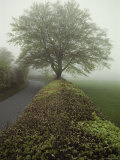 Hedge-Lined Country Road in Somerset, England Photographic Print by Sam Abell