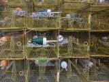 Crab Traps and Buoys Stacked on Chesapeake Bay Pier Fotografie-Druck von David Evans