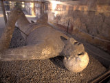 Man's Body Cast Inside Macellum in Pompeii, Italy Lámina fotográfica por Nowitz, Richard