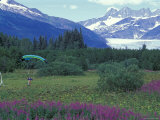 Paraglider Landing in a Field near the Mendenhall Glacier, Alaska Photographic Print by Rich Reid