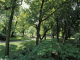 Scenic and Shady Central Park Garden Pathway on a Summers Afternoon, New York Impressão fotográfica por Jason Edwards
