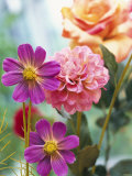 Cosmos, Dahlias and Roses (Fabric Flowers) Photographic Print by Roland Krieg