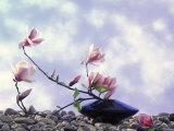 Magnolia Branch in Vase Photographic Print by Roland Krieg