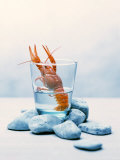 Freshwater Crayfish in a Glass of Water Fotografisk tryk af Tim Thiel