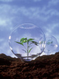 Plant Protection: Young Plant Under Glass Dome Photographic Print by Roland Krieg