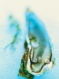 Fresh Oyster with Pearl Fotografie-Druck von Jo Kirchherr