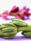 Bunch of Young Bananas Lámina fotográfica por Armin Zogbaum