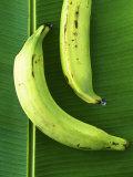 Two Plantains on a Banana Leaf Lámina fotográfica por Armin Zogbaum
