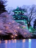Kirsikankukat Premium-valokuvavedos
