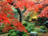 Garden with Maple Trees in Enkouin Temple, Autumn, Kyoto, Japan Photographic Print