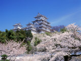 Cherry Blossoms and Himeji Castle Fotografie-Druck