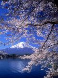 Cerezos en flor y monte Fuji Reproducción de lámina sobre lienzo