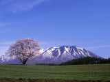 Cherry Blossoms and Mt. Iwate Fotografie-Druck