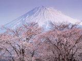 Kirsikankukinta ja Fuji-vuori Valokuvavedos