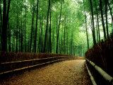 Bamboo Lane, Nishiyama, Kyoto, Japan Fotoprint