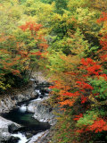 Autumn Leaves, Nakatsugawa, Fukushima, Japan Lámina fotográfica