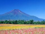 Cosmos Fields & Mt. Fuji, Oshino, Yamanashi, Japan Photographic Print