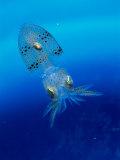 Baby Squid Fotografie-Druck