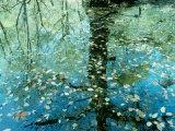 Leaves on the Water Fotografie-Druck