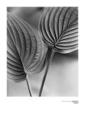 Duex Feuilles Posters af Christian Coigny