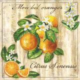 Mon Bel Oranger Posters by Noel Romero