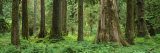Trees in a Rainforest, Hoh Rainforest, Olympic National Park, Washington, USA Photographic Print by  Panoramic Images