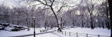 Bare Trees During Winter in Central Park, Manhattan, New York City, New York, USA Impressão fotográfica