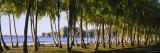 Palm Trees on the Beach, Carrillo Beach, Nicoya Peninsula, Guanacaste Province, Costa Rica Fotografisk trykk av Panoramic Images,